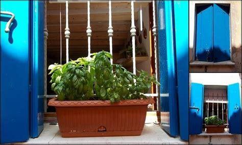 piantare il basilico in vaso erbe aromatiche in cucina aromatiche come usare le
