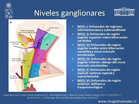 cadenas ganglionares cervicales seram residentes de cirug 237 a universidad de chile hospital del
