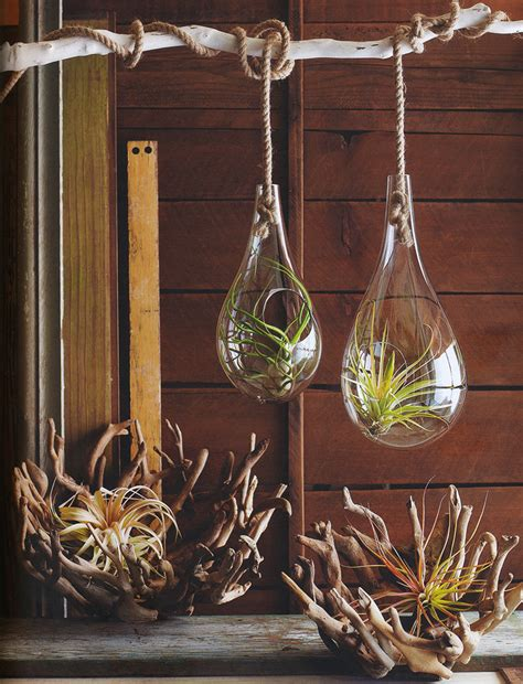 Planters Plants by Mid Century Modern Air Hanging Planter For Tillandsia Air