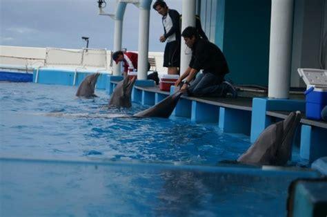 Aquarium Central Filter Dolphin Excellent dolphin enclosure picture of aquarium of veracruz veracruz tripadvisor
