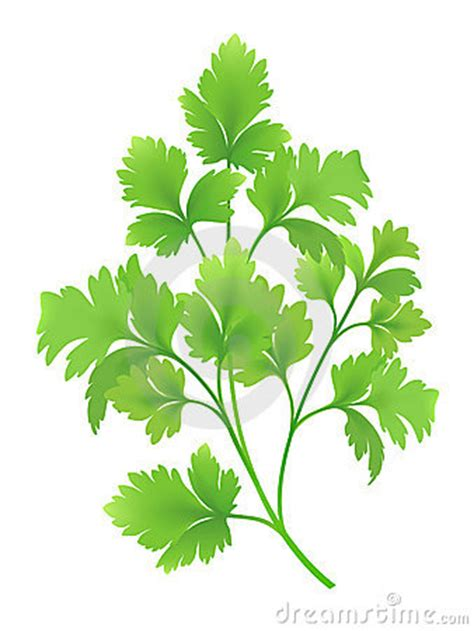 Parsley Clipart parsley clipart clipart suggest