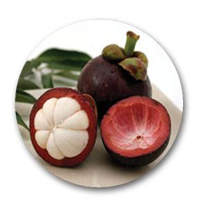 Obat Herbal Asam Urat Ace Maxs obat herbal untuk asam urat yang uh obat liver alami