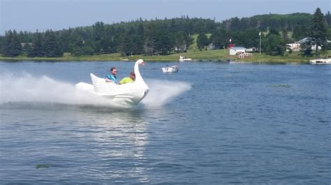 swan boats london video couple soupes up swan boat with sea doo parts the
