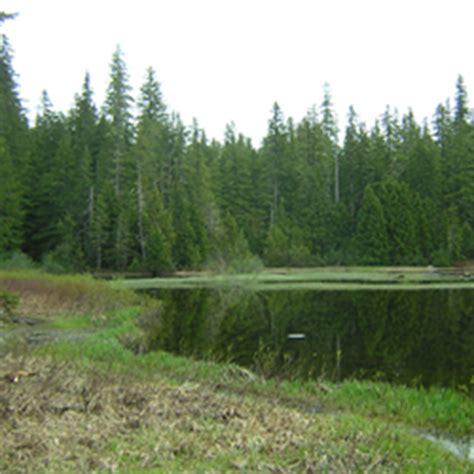 lake quinault boating regulations mink lake trail olympic national park u s national