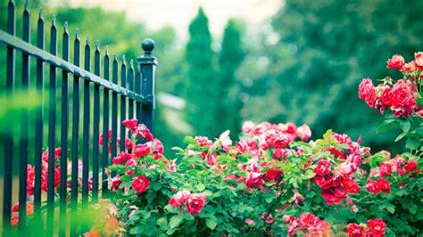 Planner Ikea beautiful rose garden wallpaper muksstcz decorating clear