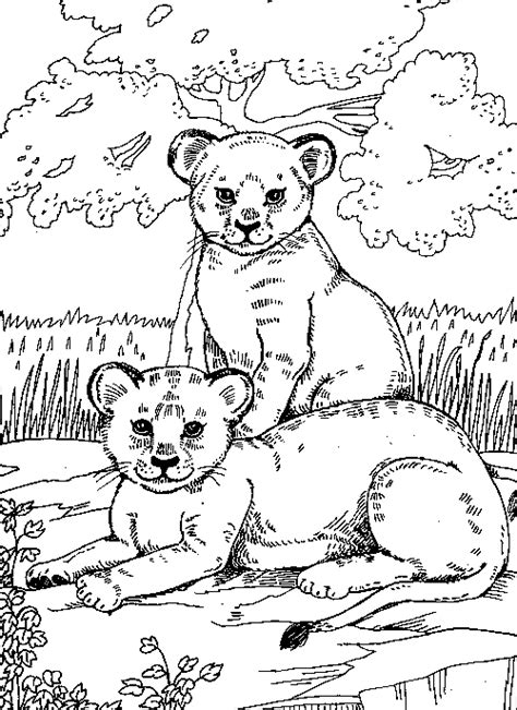 easy lion cub coloring pages
