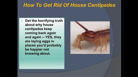 how to get a house how to get rid of house centipedes learn how to get rid of house centipedes safe