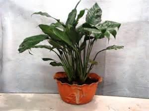 indoor potted plants indoor potted plants 07 atlas resources