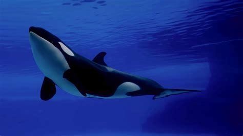 los animales marinos marine clasificacion y caracteristicas de animales marinos carn 237 voros