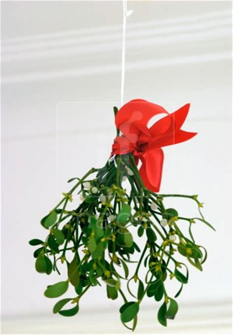 ideas about mistletoe decorations christmas easy diy