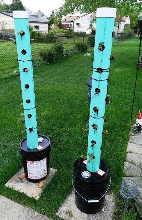 want to build your own hydroponic strawberry tower learn