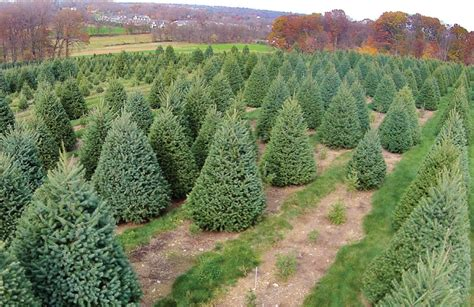 the busy life of a christmas tree farm owner farming