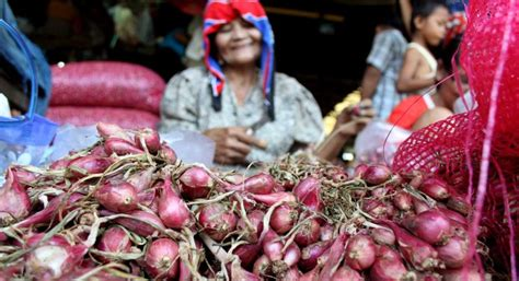 Bibit Bawang Merah Di Medan harga bawang merah di medan naik 100 persen okezone ekonomi