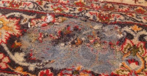 moth spray for wool rugs rug master moth damage and rug cleaning in los angeles