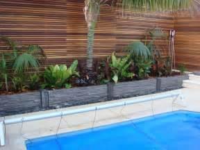 birds nest palms and cordylines pool pinterest
