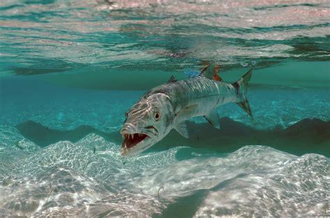 boat crash shark running in st croix runningandthecity