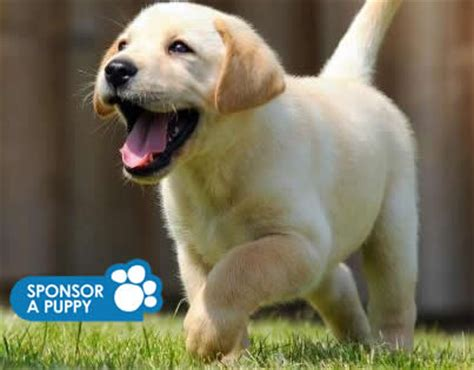 dogs walkthrough sponsor a puppy as gift guide dogs sponsorship gifts