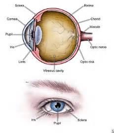 Blind Spot Synonym Brooke Plyler Human Eye Diagram