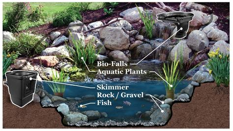 is a backyard pond an ecosystem ecosystem backyard pond premier ponds of maryland