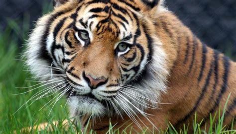 10 hewan langka di indonesia dan hir punah sejujurnya
