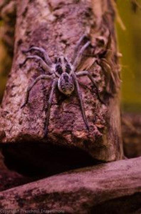 spiders images   spider bites animales wolf spider