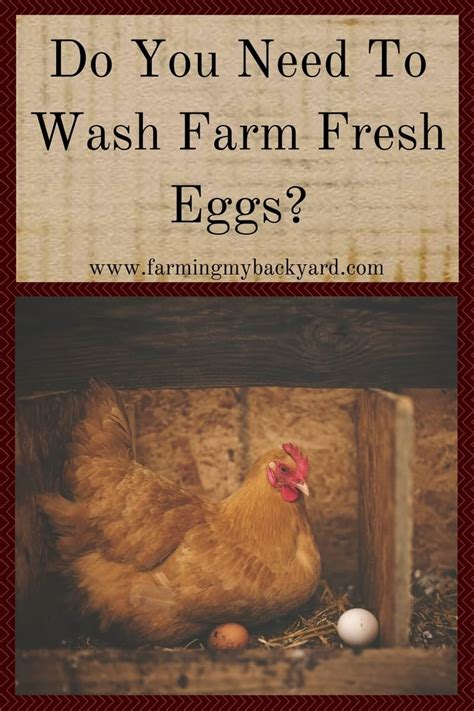 Do You Want To A Farmer From Lubbock 2 by Do You Need To Wash Farm Fresh Eggs Farming My Backyard