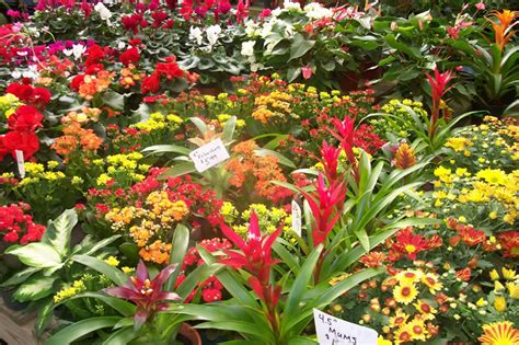 flowers and plants tropical plants house plants potted flowers columbia