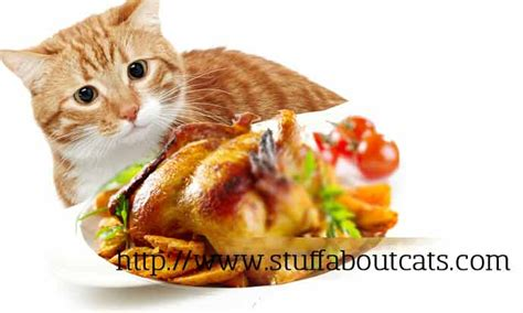 can a eat chicken can kittens eat chicken can i give my cat
