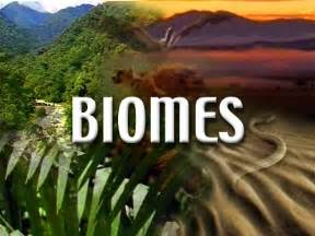 Plants That Live In The Tropical Rainforest Biome - biomes and habitats discovery education