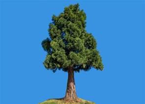 tree pic the mayor of redondo california never killed a