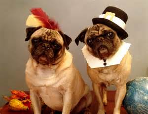happy thanksgiving pug diy pilgrim and indian costumes alana jones mann