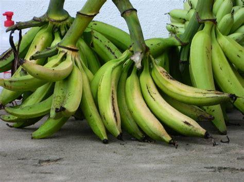 pisang nangka berkah khair