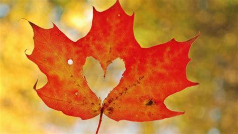 High Resolution Maple Leaf Deviantart   maple leaf photos wallpaper high definition high