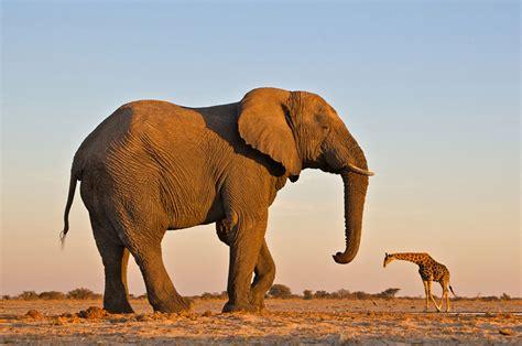 filme stream seiten goodfellas elephant vs giraffe