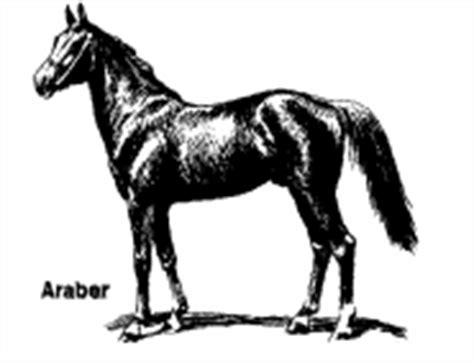 174 colecci 243 n de gifs 174 gifs feliz domingo gifs animados de caballos animaciones de caballos