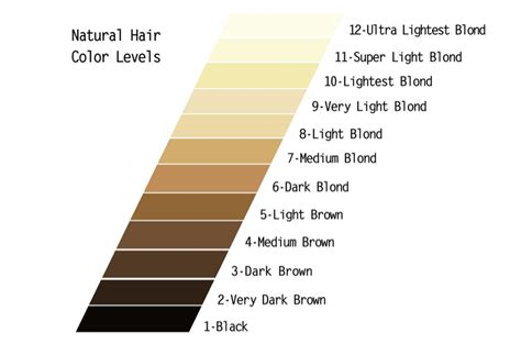 loreal hair color wheel hair color color wheel in 2016 amazing photo