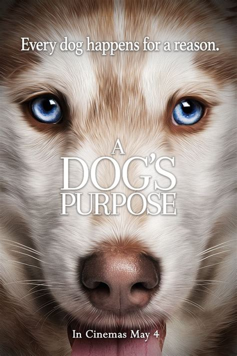 a s purpose on netflix best 25 a dogs purpose ideas on