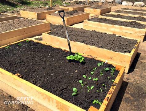 gardening beds vegetable garden update niki s new raised beds
