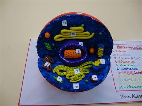 celula animal maqueta escolar youtube resultado de imagen para maqueta de la celula humana