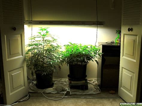 Closet Grow Room Setup by Small Closet Grow Room Roselawnlutheran