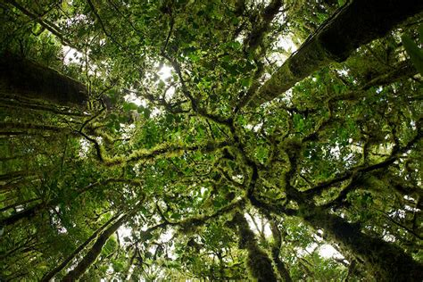 Canopy Plants In The Rainforest by Rainforest Canopy