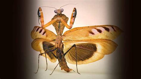 imagenes raras de animales fotos de insectos animales raros y extra 241 os bajo el