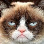 Glaring Meme - grumpy cat glare imgflip
