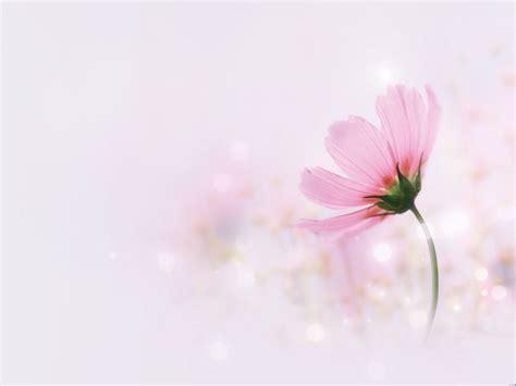 pink elegant flowers ppt backgrounds pink elegant flowers