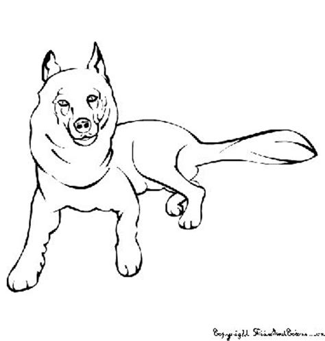 wet dog coloring page dogs
