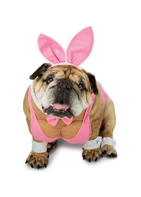 hunny bunny dog costume pet costumes