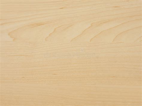 maple tree wood maple tree wood stock image image of board lumber furniture 7180641