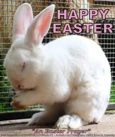 Easter Bunny Meme - the happy easter prayer rabbit found praying funny photo