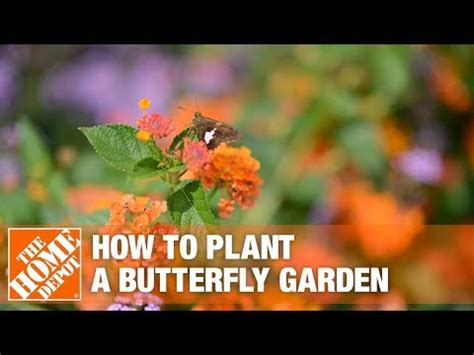 build  butterfly garden  home depot youtube