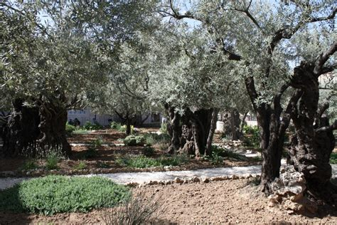 Garden Of Gethsemane Images by February 14 2016 Day 42 14 Presbyterian
